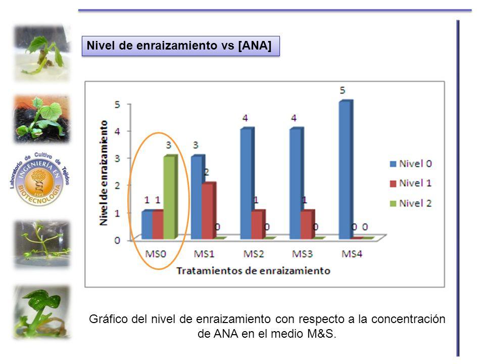 Nivel de enraizamiento vs [ANA]